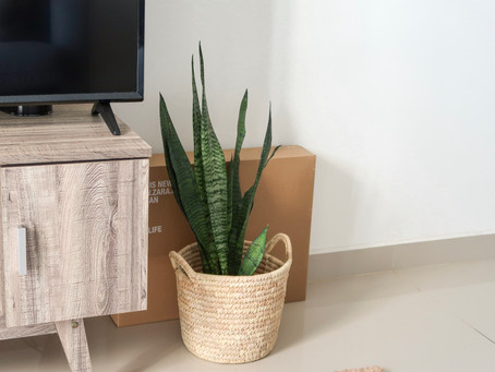 Project Apartment Jungle