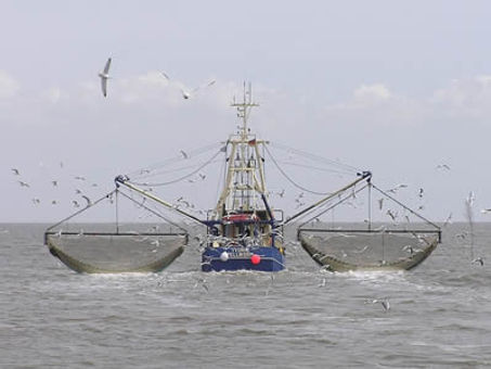 Procomer Seafood Picture.jpg
