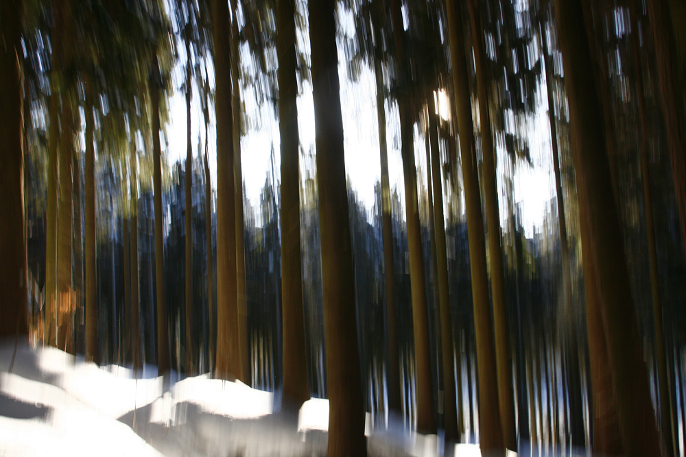 winter+(4).JPG