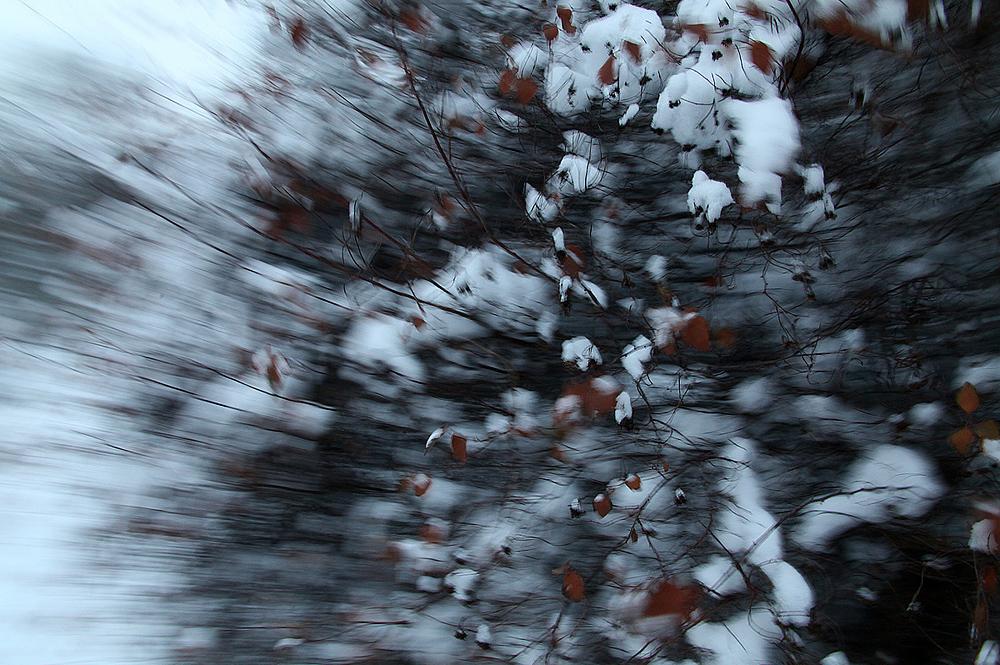 winter+(10).jpg