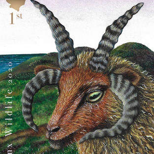 Loaghtan Manx Stamp done in watercolour