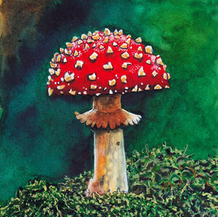 Toadstool done in watercolour