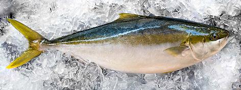 Kingfish-LoRes-8628.jpg