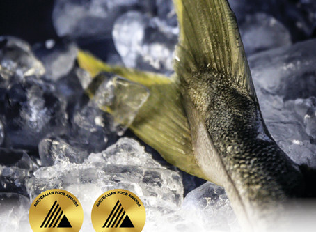 It's a GOLD and BEST IN CLASS for Geraldton Yellowtail Kingfish