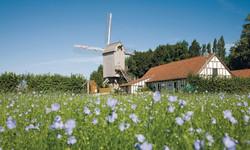 Le moulin  de Terdeghem