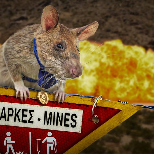 Landmine Detection Rat Receives Animal Equivalent of the Distinguished Service Cross
