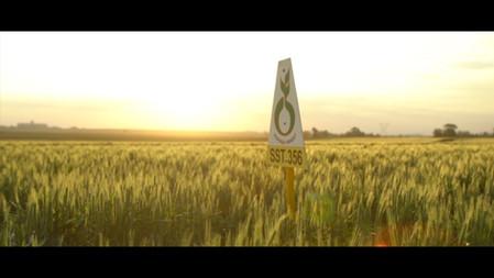 Sensako Corporate Video
