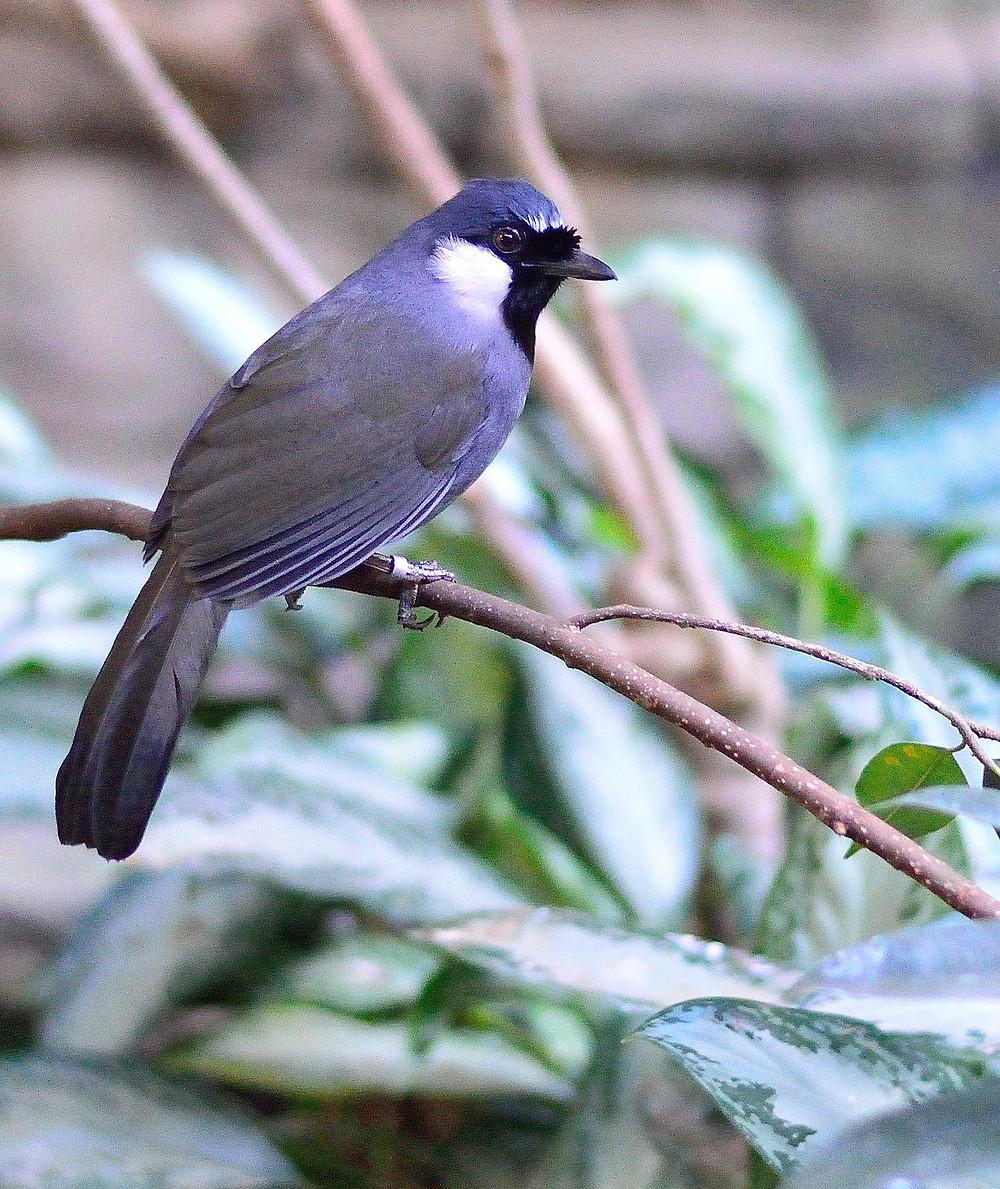 """""""Un pájaro posado en un árbol nunca tiene miedo de que la rama se rompa, porque su confianza no está en la rama sino en sus propias alas"""". Anónimo"""