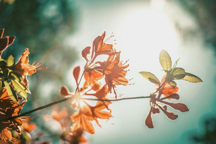 Orange Blossom_edited_edited.jpg