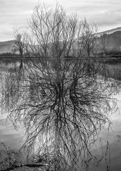 lago palustre di Bientina