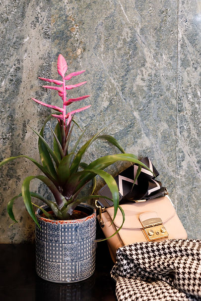 Bromelia Botanica | Bedrijfsfotografie | foto: Lieke Alblas, by Liek.