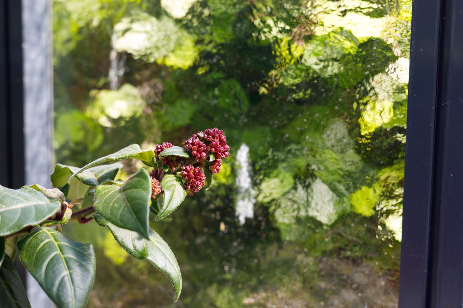 Plantanious   Bedrijfsfotografie   by Liek. & La Fabriek