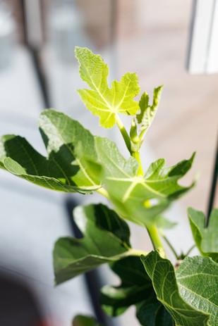 Plantanious | Bedrijfsfotografie | by Liek. & La Fabriek