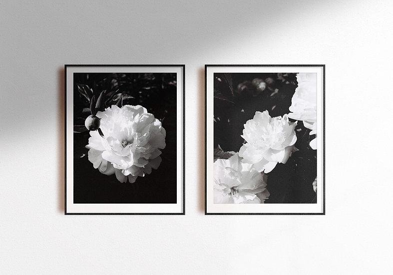 Black 'n White Roses