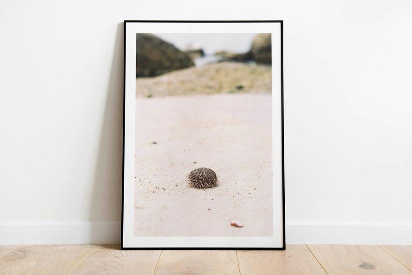 Sea Urchin | Kalkbay, Cape Town