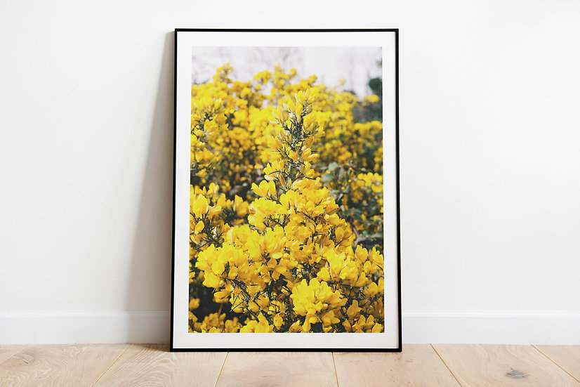 Yellow Blossom part 1   Brittas Bay, Ierland