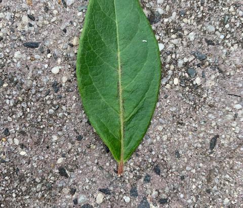 Green: Leafy Green Pie with Spelt Crust