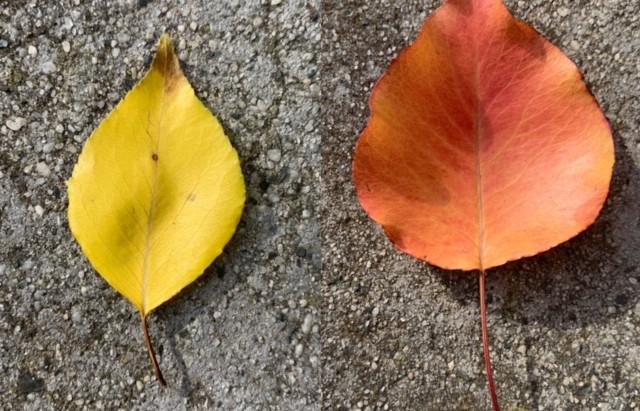 Yellow/Orange: Yellow Lentil Dahl