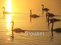 Groupe2-tsgestalt_edited.jpg