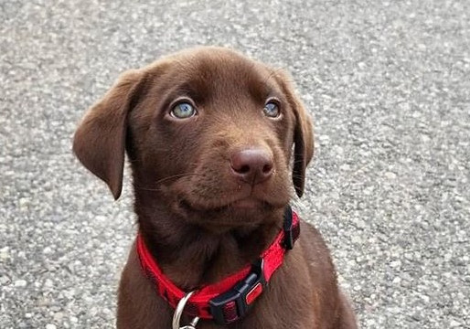 5 Staples of Training a Pup
