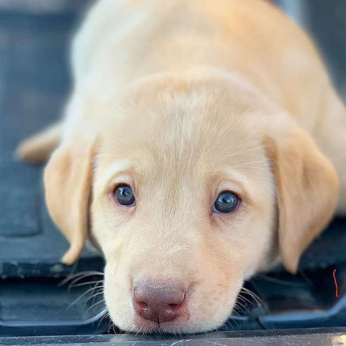 Puppy pictures always are a good idea. '