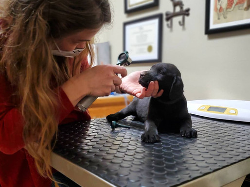 Routine Vet Visits & Health Check Recommendations