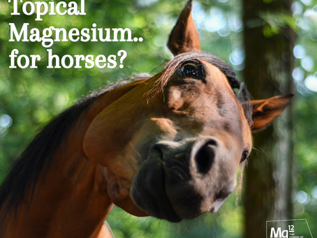 The Benefits of Transdermal Magnesium for Horses