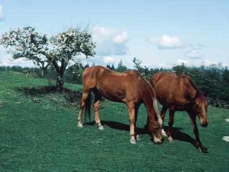 Horse Tales - by Jodi Walker