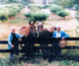horsecropsharp.jpg
