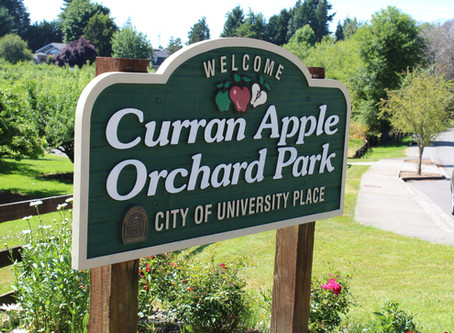 The Story of the Curran Apple Orchard