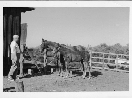 Horse Tales - by Judy Manza and Dorette Markham