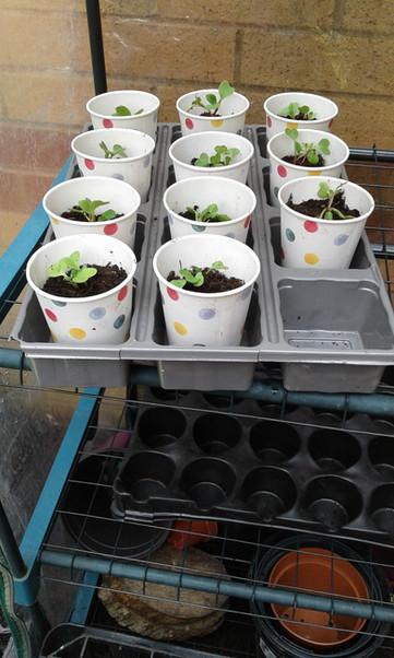 Gardening and growing .jpg