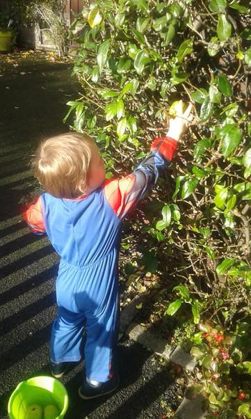 Middleton fruit trees