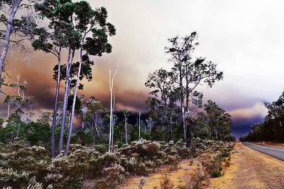 Bush Fire Nannup WA Web.jpg