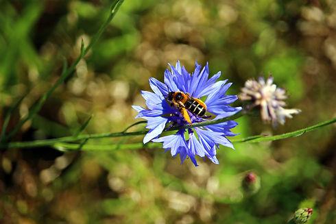 flower-2490079.jpg