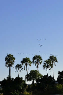 palm-trees-73121_1920.jpg