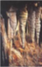 GRUTES CANALETES.jpg
