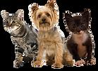 Projekt Tierschutz