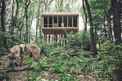 Tree Inn Wolf vor Baumhaus