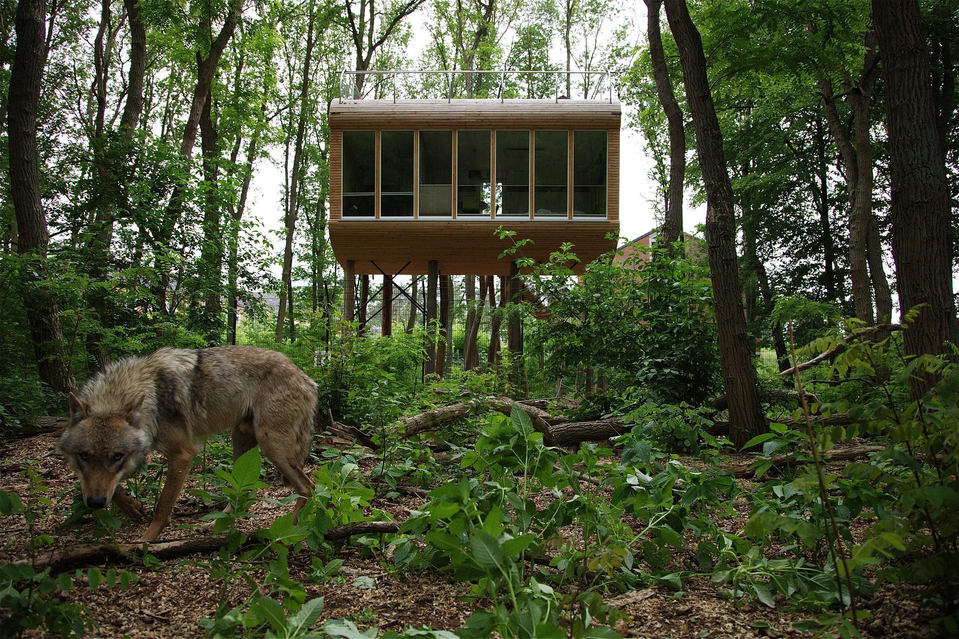 Baumhaus 1 + Wolf