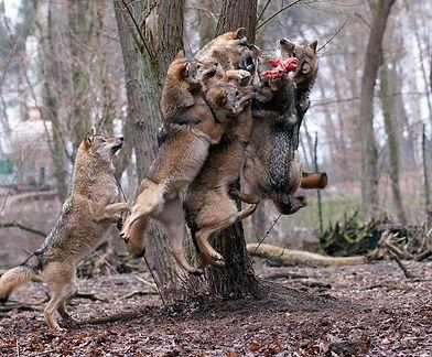 Tree Feeding