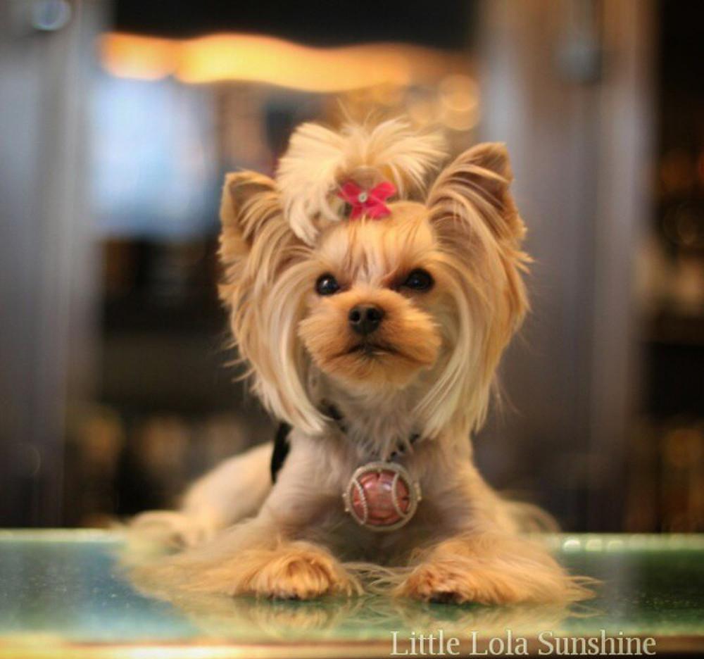 Pets Lola.jpg