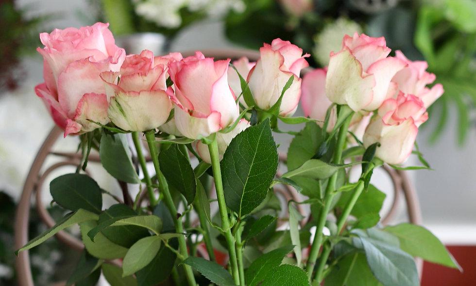 Pink Roses - 50 cm - long stemmed. Qty: 10/12/15/20/24