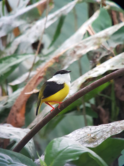 Birding tours in Arenal