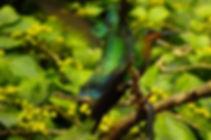 Arenal Birding Experiences