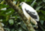 Birdwatching Arenal