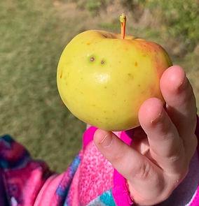 apple%20pic_edited.jpg