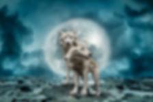 wolves-2969361_640.jpg