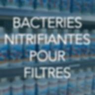 menu-bactéries-nitrifiantes-filtres.jp