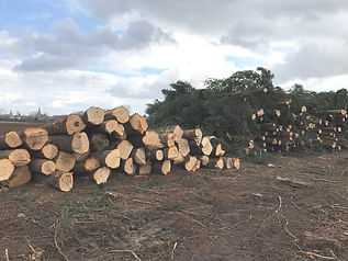 Abbattage d'arbres - Broyage Noeppel